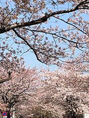 品川区の春の訪れ
